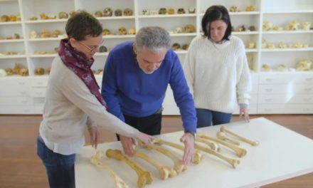 El movimiento impreso en los huesos