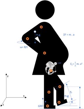 La física como inspiración para el estudio del embarazo a lo largo de la evolución humana
