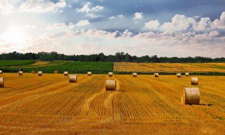 El salvado de trigo, fuente de compuestos bioactivos naturales para preservar alimentos
