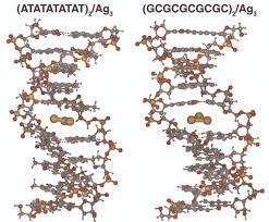 Representación de Ag3 intercalado entre distintas secuencias de ADN