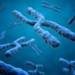 La telomerasa, aliada contra el envejecimiento