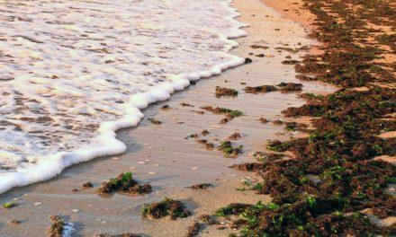 La gelatina del mar